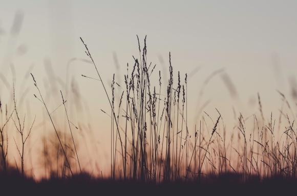 High grasss